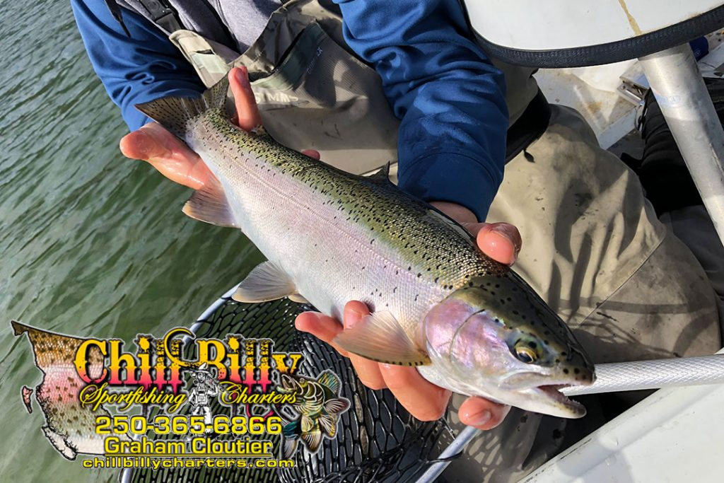 Chillbilly Charters Logo and Rainbow Trout