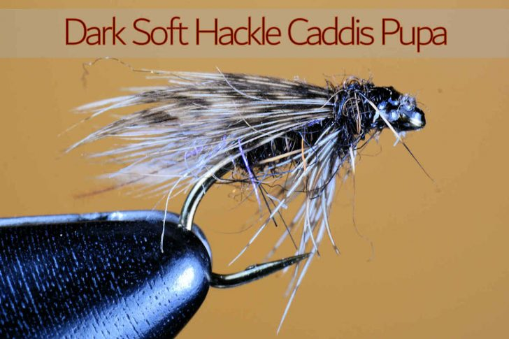 Dark Soft Hackle Caddis Pupa