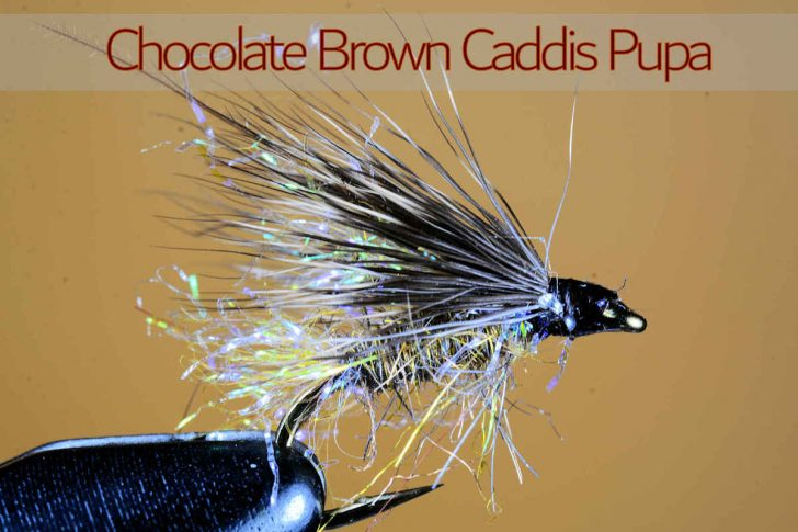 Chocolate Brown Caddis Pupa