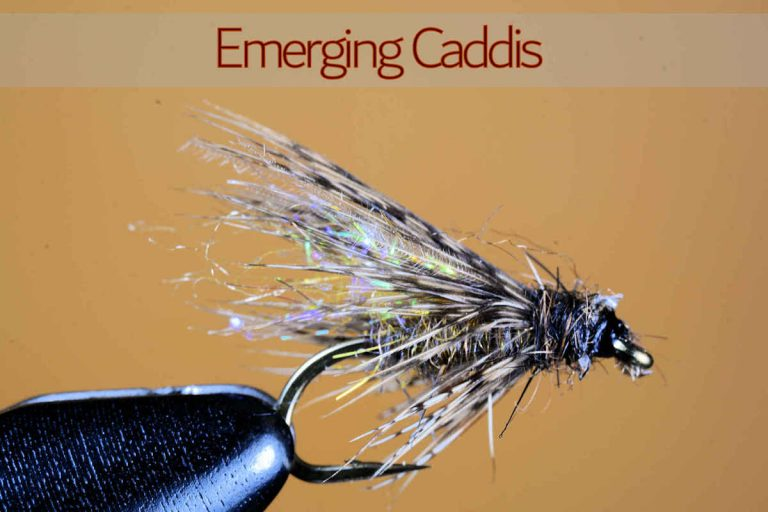 Emerging Caddis