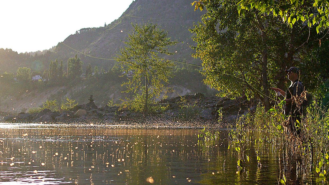 Columbia River Caddisfly Hatch