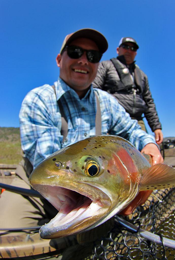 Columbia River Rainbows - Client Rainbow Trout