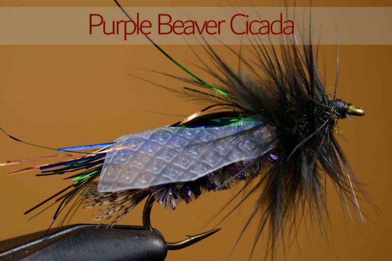 Purple Beaver Cicada