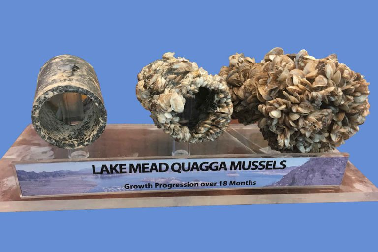 Columbia River Conservation - Zebra Mussels