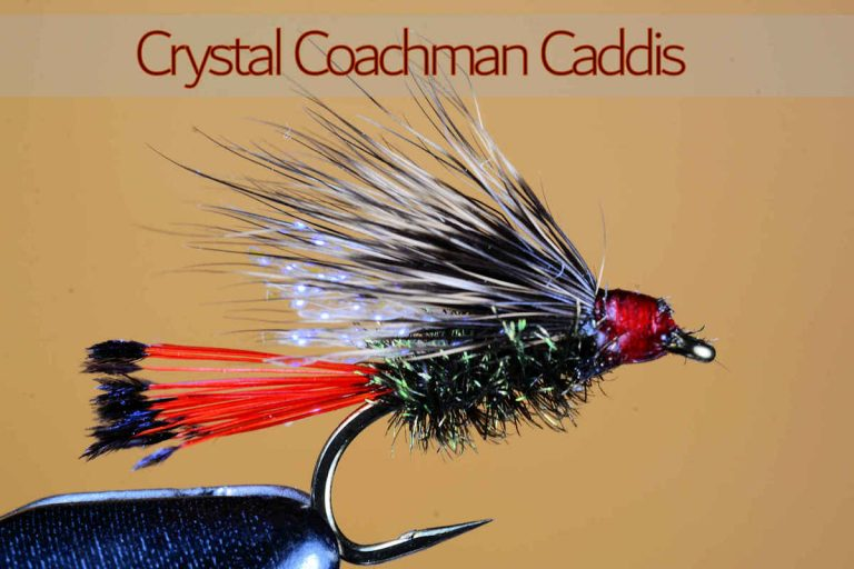 Crystal Coachman Caddis