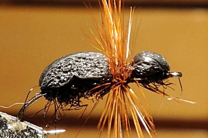 Black Ant Pattern